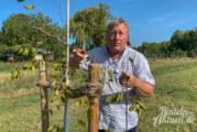 Unbekannter zerstört 30 Apfelbäume am Generationenpark in Rintelner Südstadt