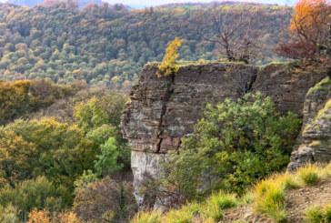 Tag des Geotops: Geführte Wanderung im Naturwald am Hohenstein