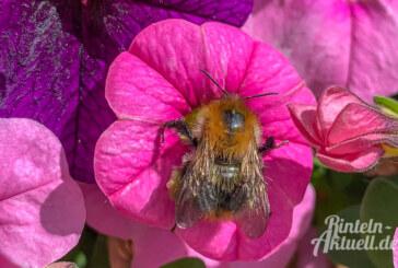 Unsere heimischen Hautflügler: Wespen, Hummeln und Hornissen – nervig oder nützlich?