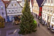 Weihnachtsbaum für Rinteln geliefert: Die Zwei-Tonnen-Tanne ist da