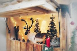 Rinteln glänzt in der Adventszeit