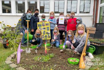 """Grundschule Unter der Schaumburg pflanzt """"Tulpen für Brot"""""""