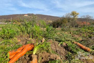 Schaumburg: Rote Beete und Karotten noch bis zum 1. Advent selbst ernten