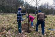 Erweiterung der Streuobstwiese Hohenrode: Zehn neue Obstbäume alter Sorten gepflanzt