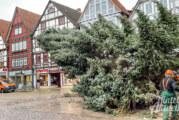 Die letzte Reise des Rintelner Weihnachtsbaums