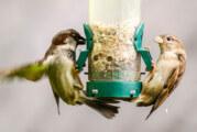 """Rekordteilnahme bei """"Stunde der Wintervögel"""" zeichnet sich ab"""