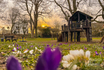 Blumenwall: Lindenallee bekommt neue Bäume, Spielplatz soll bleiben