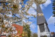 Todenmann: Osterbasar und Osterbaum-Aktion der Kapellengemeinde