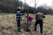 Hohenrode: NABU Rinteln pflanzt neue Obstbäume und erneuert Weidezäune