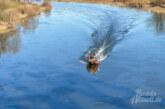 Feuerwehreinsatz in Rinteln: Öliger Film treibt auf der Weser