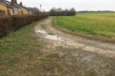 CDU beantragt Kirschen, Kies, Bäume und Hecken für Grenzweg-Quartier