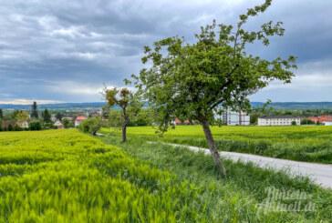 Baumpflanzung mit Hindernissen: Obstbäume am Acker ungeeignet