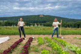 Selbsternte unter der Schaumburg: Bald startet der Bio Acker Coverden