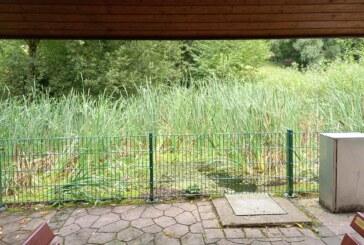 Todenmann: Verschönerungsverein will Fläche am Dorfteich reinigen
