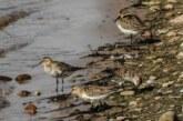 Wanderung im Zeichen der Zugvögel