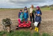 Schaumburg: Rote Bete und Karotten zum Selbsternten