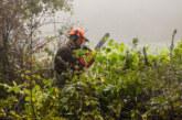 Heckenpflege in alter Kulturlandschaft: NABU Rinteln stutzt Bäume und Sträucher